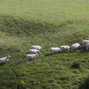 8 Signs You're Following the Herd